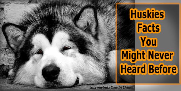 Huskies Facts