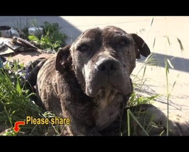 Even Experienced Volunteers Shuddered, When They Saw Poor State Of This Dog