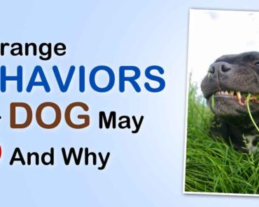 4-strange-behaviors-dog-do-fb