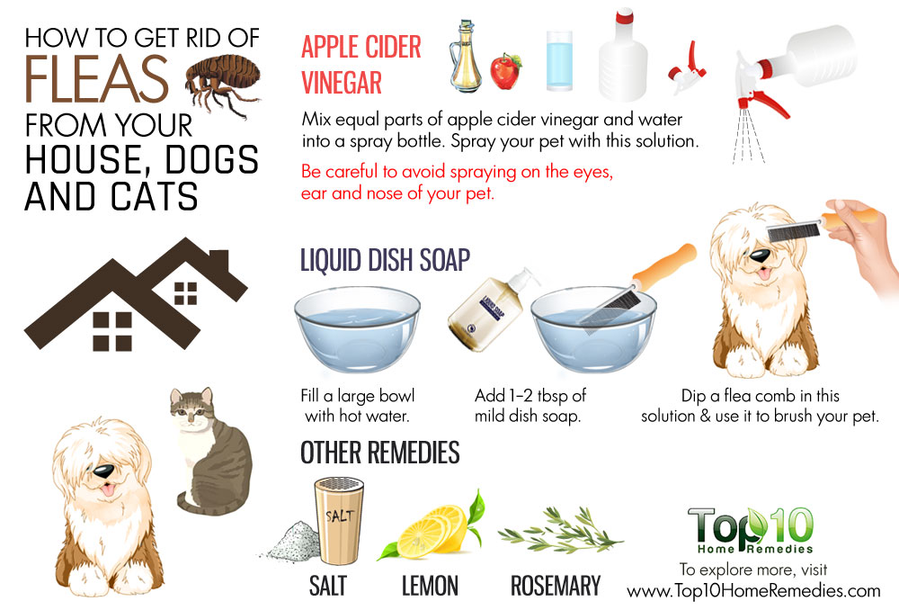 How To Know If Your Dog Has Fleas Dogs Addict