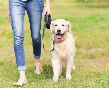 5 Ways To Make The Walk More Interesting