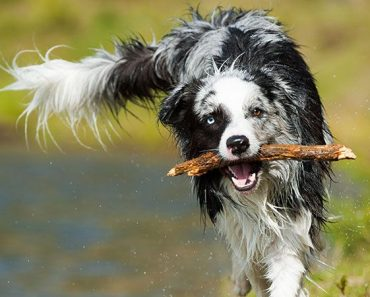 6 Steps To Teaching Your Dog To Fetch