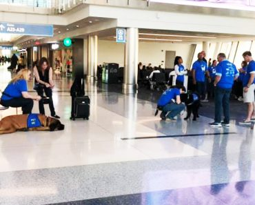 A Complete Guide about Therapy Dogs in the USA Airports