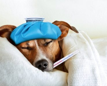 Dog with thermometer in their mouth