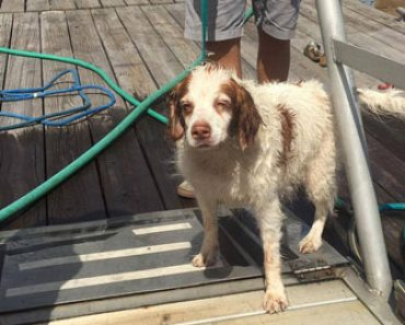 A Spaniel who fell overboard from a ferry is rescued by fishermen off Martha's Vineyard in Massachusetts.