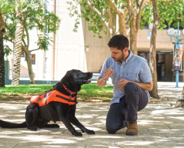 Haptic Cues - Whole Dog Journal