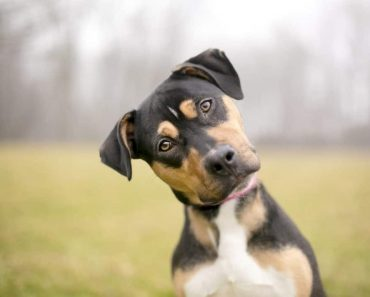 How To Get Your Dog To Listen To You | Dog Won't Listen