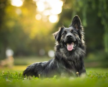 Lesser Known Venues That Can Benefit from Therapy Dogs