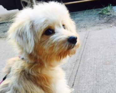 Neil Patrick Harris Adopts Adorable Puppy