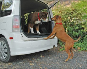 Planning A Road Trip with Your Dog?