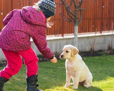 Horizontal image of a 6 years old girl training her Labrador retriever puppy in backyard.