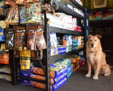 So What's the Best Dog Food?