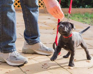 Starting Your Puppy Off Right!   Puppy Basics