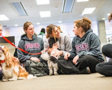 Unusual Therapy Animals Lighten the Mood at the USA Airport