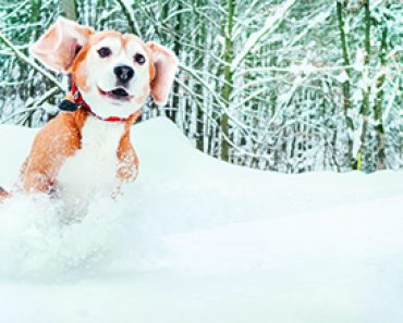 Ways to Keep Your Dog Active During Winter