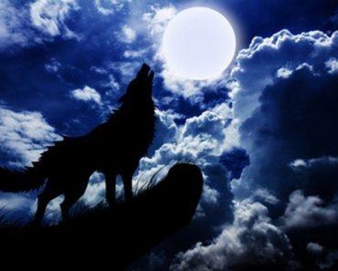 Dogs Howl