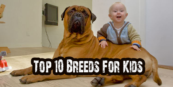 Breeds For Kids