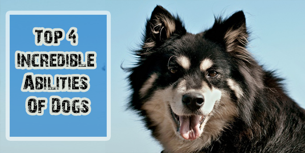 Incredible Abilities Of Dogs