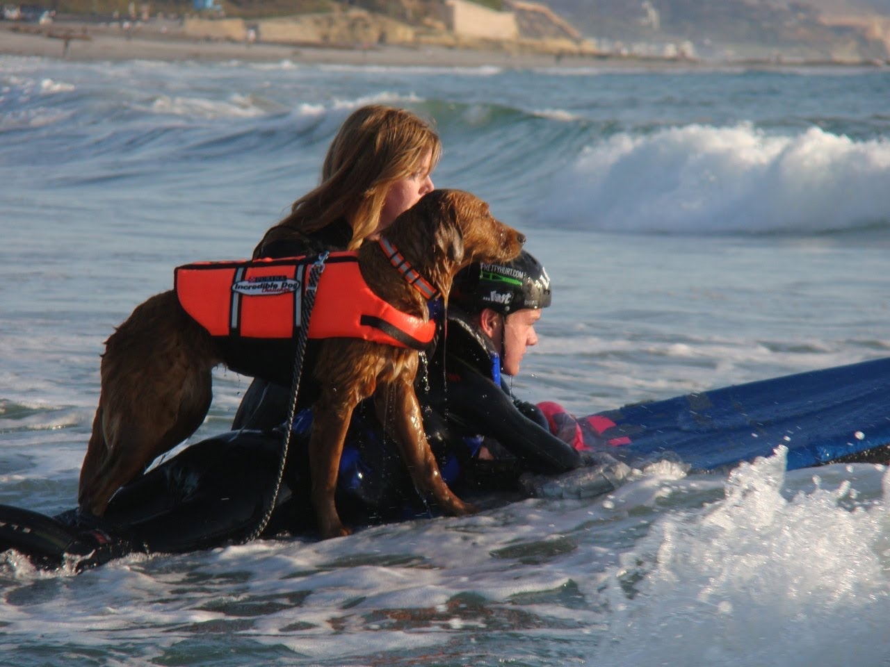 Dog Surfer