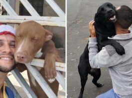 Brazilian Mailman Takes Adorable Selfies With Every Dog