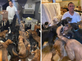 Man Brings 300 Dogs