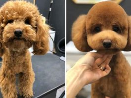 Dogs Before and After Visiting The Groomer