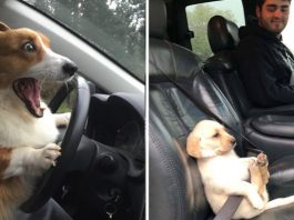 Dogs That Love As Well As Hate Car Rides