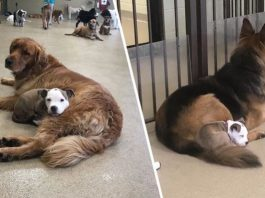 Dogs In Daycare So She Can Nap On Them