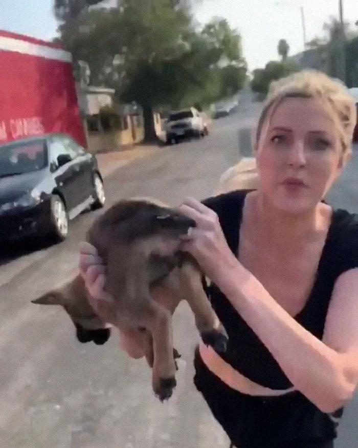Throws A Puppy At A Man