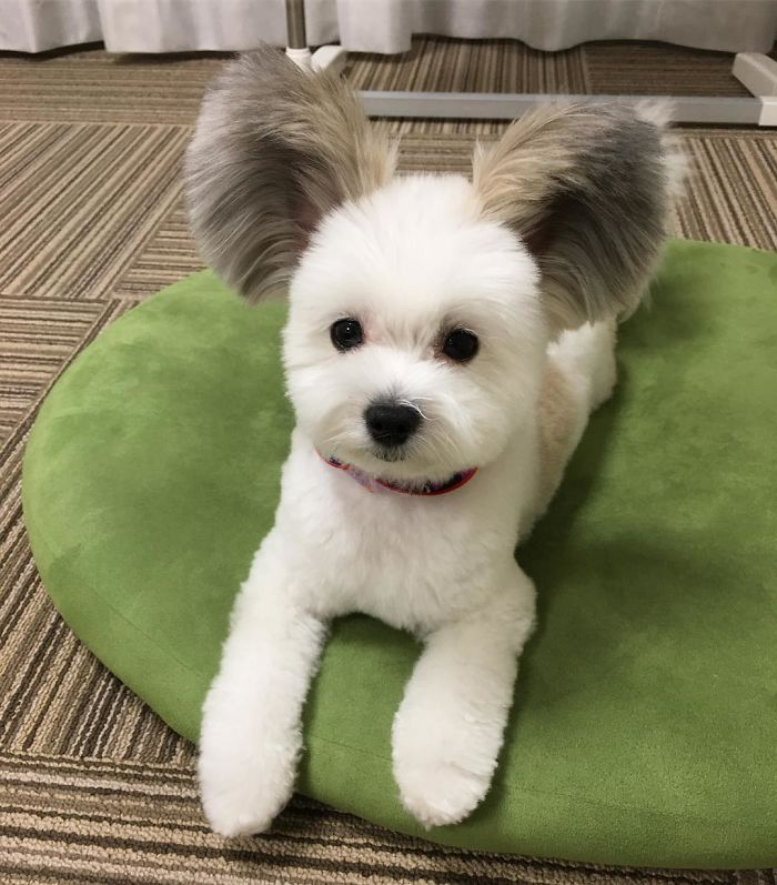 Adorable Dog