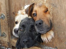 Dogs Who Are Rude Neighbors