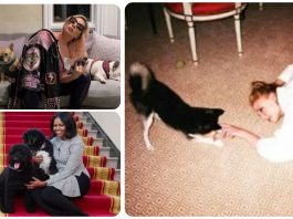 12 Famous Faces With Their Furry Friends