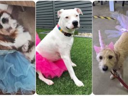 14 Dogs Looking Pretty in Tutus