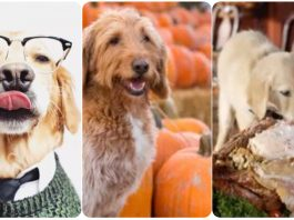14 Dogs Who Are So Excited for Fall