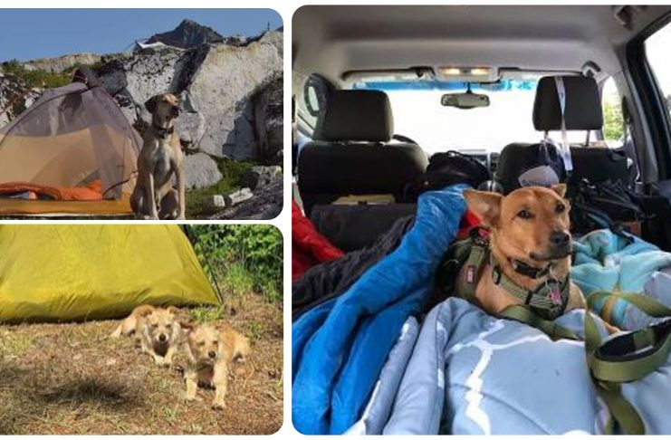 14 Dogs on Camping Trips