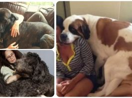 15 Big Dogs Who Still Think They're Little Puppies