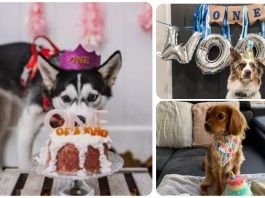 15 Dogs Celebrating Their Very First Birthdays