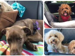15 Dogs Enjoying a Ride in Their Car Seats