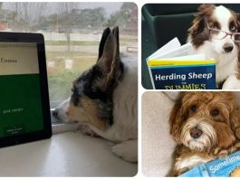 15 Dogs Who Are Bibliophiles