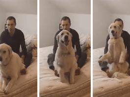 Dog Shows Trust Falls