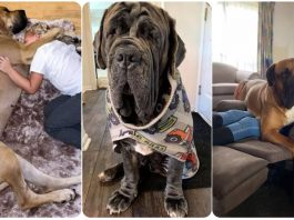 Just 19 Pictures of Big Dogs That Will Make You Say Holy Smokes
