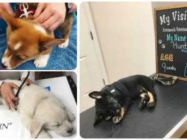 13 Puppies Who Were Very Good At Their First Vet Visit