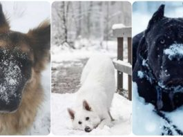Just 10 Dogs Enjoying Playtime In The Snow