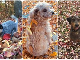 11 Dogs Who Are So Flipping Excited About Fall Leaves