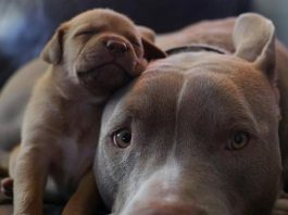 8 Incredibly Patient Dog Moms
