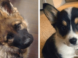 Looking At Photos Of Cute Puppies Could Just Make Your Relationship Stronger, Science Says So