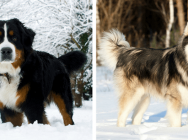 The 9 Top Dog Breeds Who Don't Mind The Cold